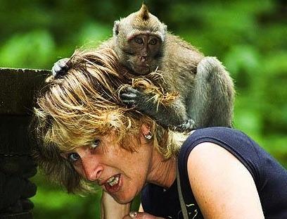 bali-monkey-attack-cropped